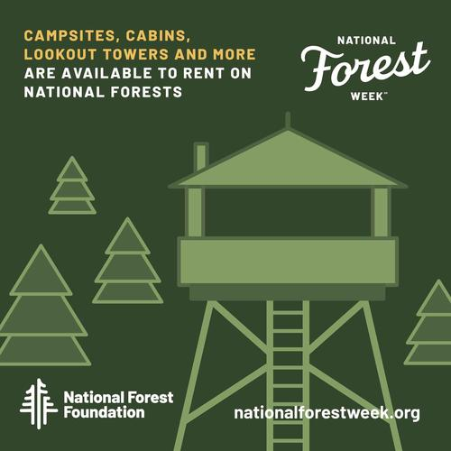 <p>National Forest Week factoid on social media</p>